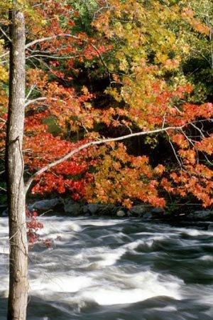 phoca_thumb_l_autumn-stream.jpg
