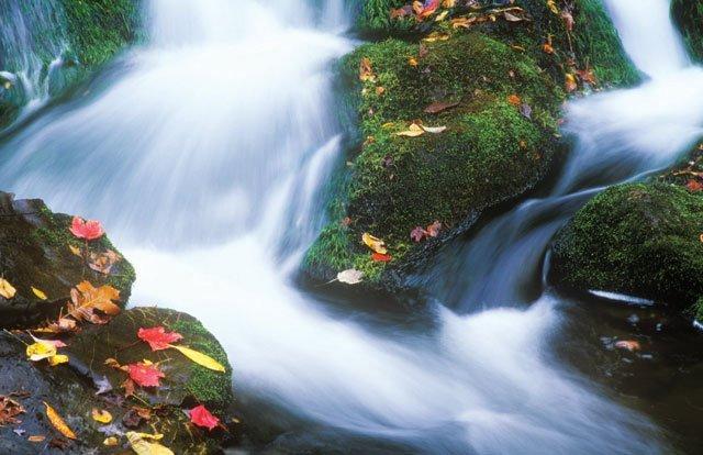 phoca_thumb_l_creek-with-fall-leaves.jpg