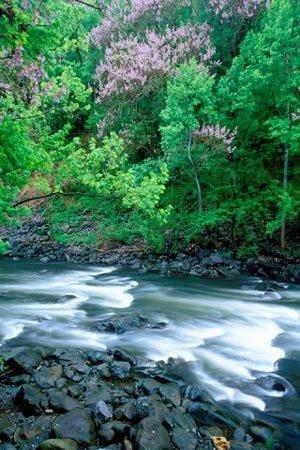phoca_thumb_l_pigion-river.jpg