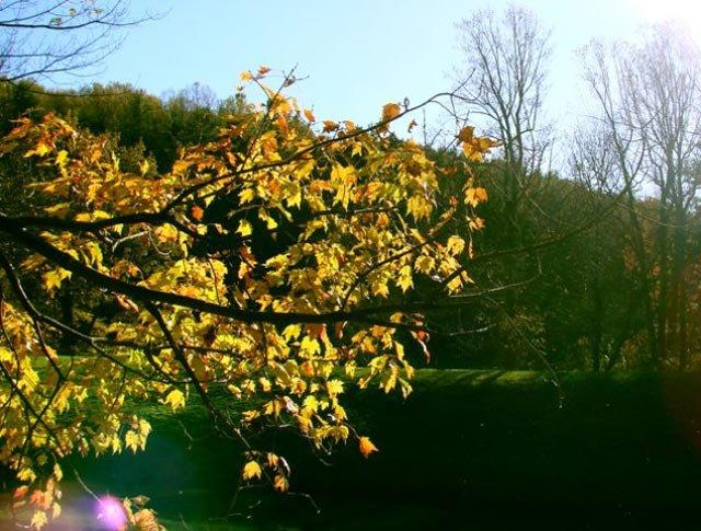 phoca_thumb_l_Autumn-Leaves.jpg