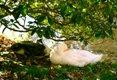 phoca_thumb_l_Closeup-of-Ducks.jpg
