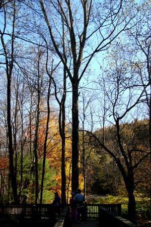 phoca_thumb_l_Trees.jpg