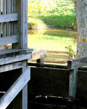 phoca_thumb_l_View-of-Pond_through-Tree.jpg