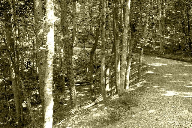 phoca_thumb_l_Carvins-Cove-Trail-View.JPG
