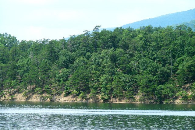 phoca_thumb_l_Carvins-Cove-Trees-Mountain.JPG