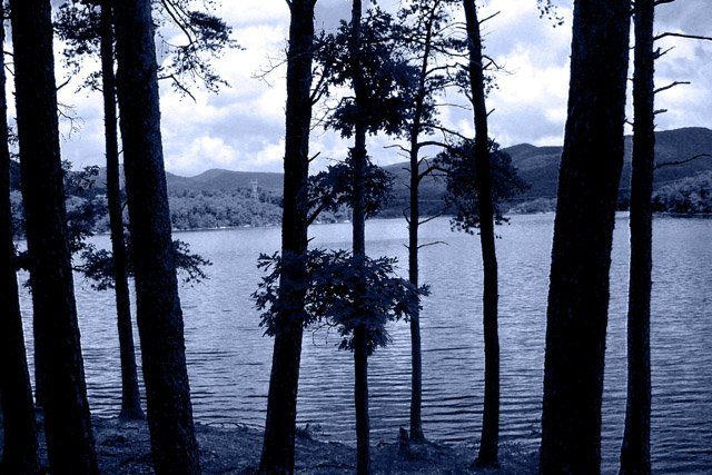 phoca_thumb_l_Carvins-Cove-View-From-Tree-2.JPG