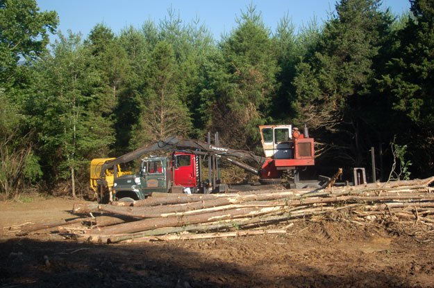 Clearcutting Forest