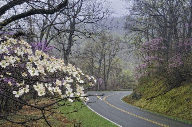 Skyline Drive Spring