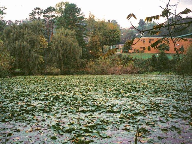 Estonoa Wetland