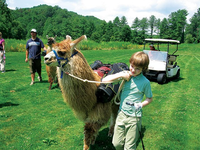 Llamas as Golf Caddies