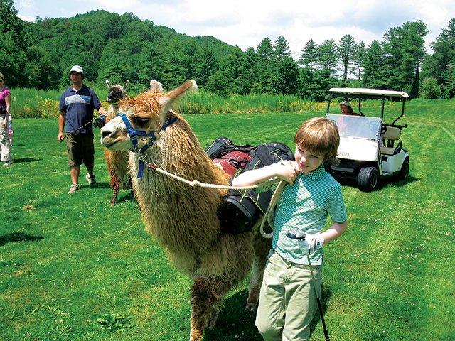 Llamas as Golf Caddies