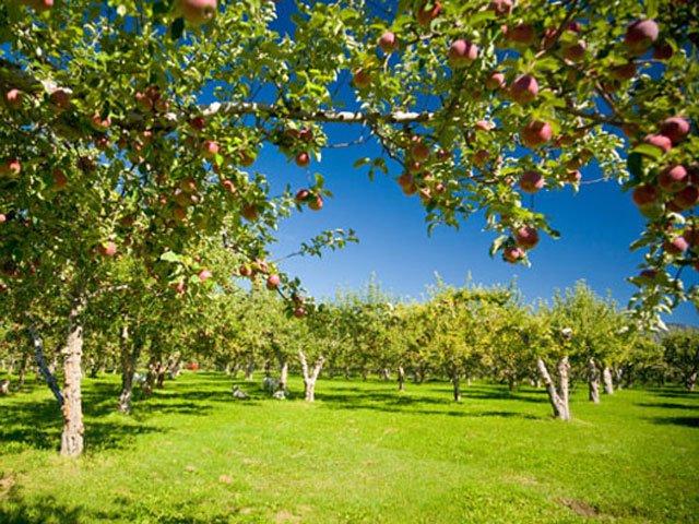 revheritage-apples.jpg