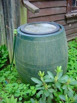 Barrel for Rainwater