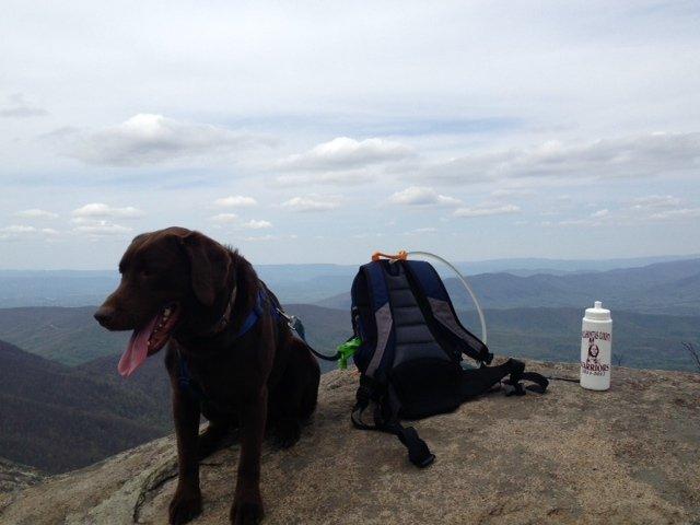 Griz on the Mountain