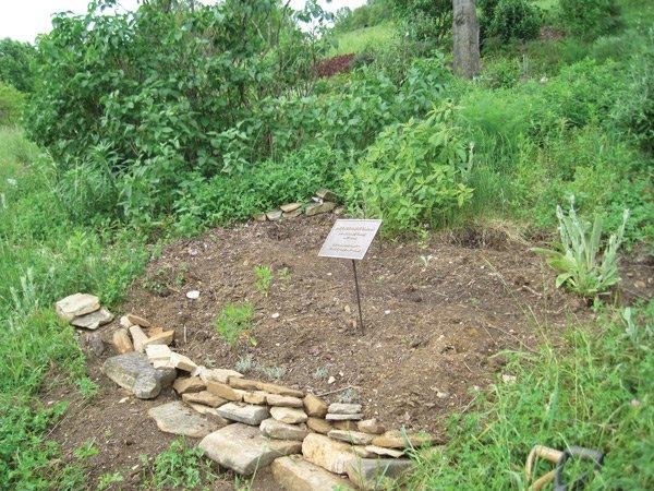 Jan's Butterfly Garden