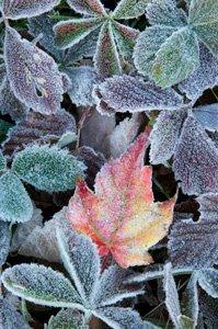 Late Fall Beauty