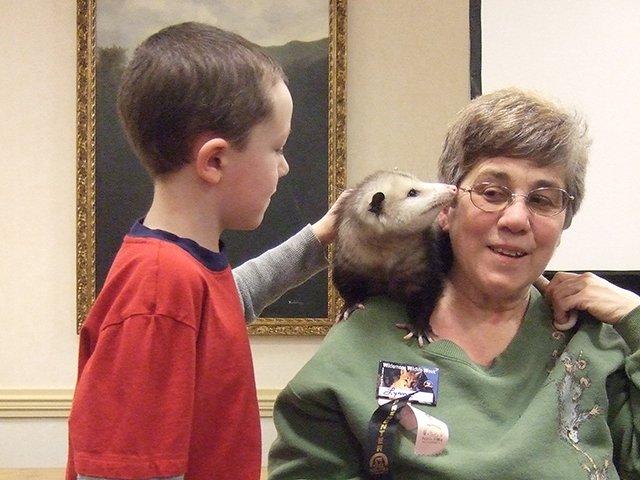 Possum-pals.jpg