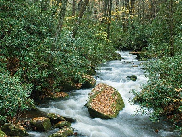 Joyce Kilmer-Slickrock Wilderness