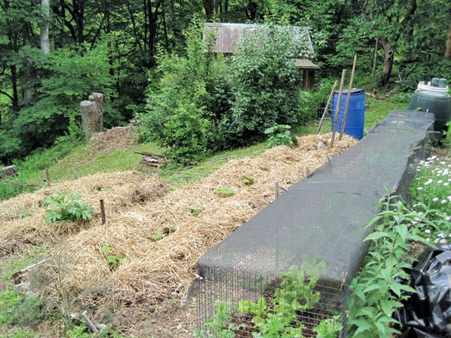 Mulching Garden