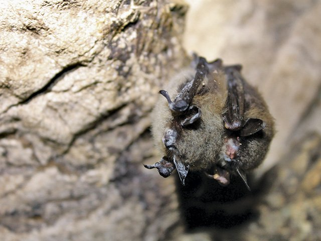 Bats Under Threat