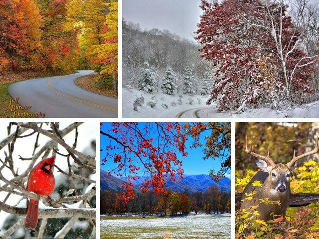 Fbook-pics-11-7-14.jpg