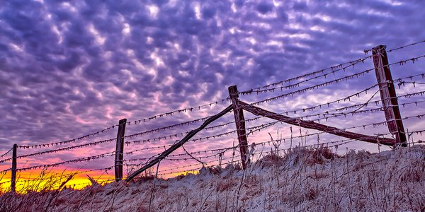 Barbed-Ice-Fence-(8588).jpg