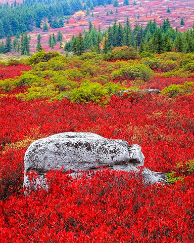 Dolly-Sods-(5735).jpg