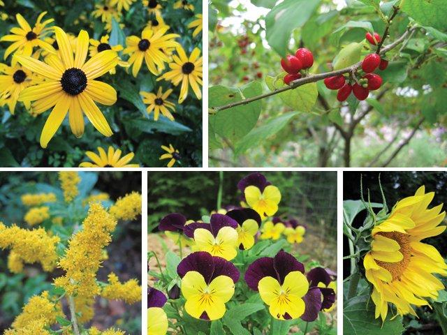 Yellows-Mellow.jpg