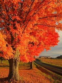 Highland County, VA