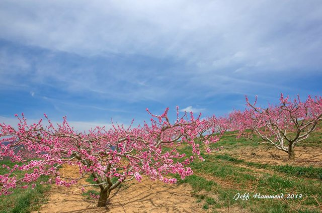 LandscapesofBR.jpg