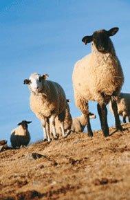wool_market.jpg