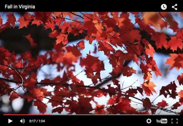 Fall webcams