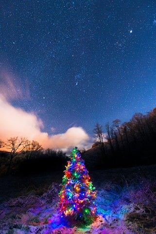 christmas_tree_night_sky_088454M2.jpg