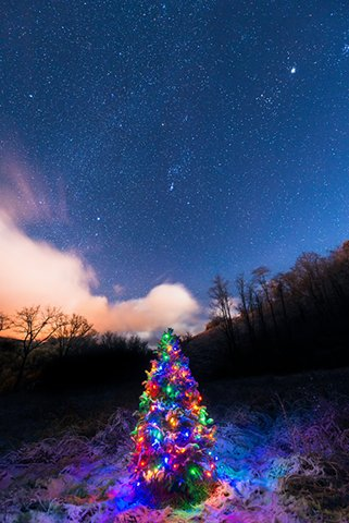 christmas_tree_night_sky_088454M2.jpg