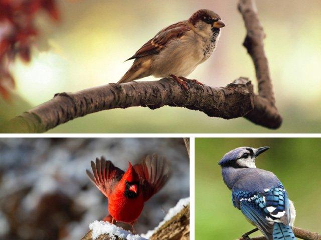 BirdCreatureFeature.jpg