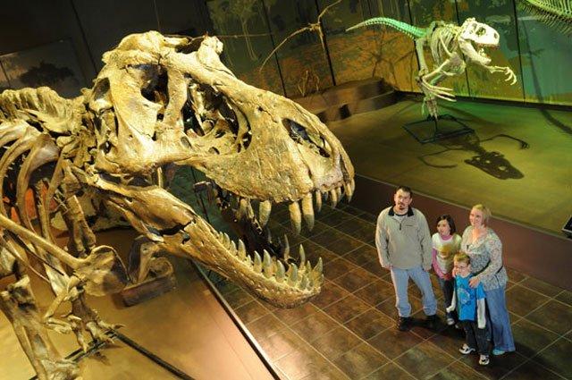 Museum Dinosaur