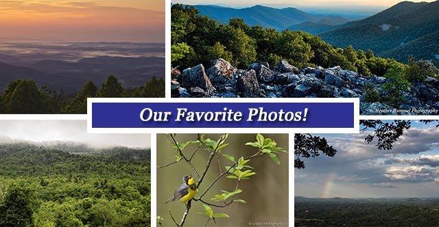 FB collage June10.jpg