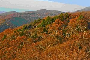 Flat Top Carolina: Hemlock
