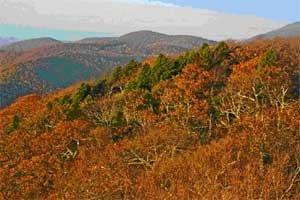 Flat Top Carolina: Hemlock