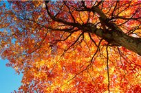 Fall Colors Explained