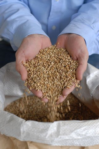 Grains at a Brewery