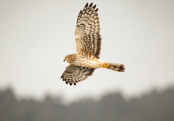 Hawks-Creature.jpg