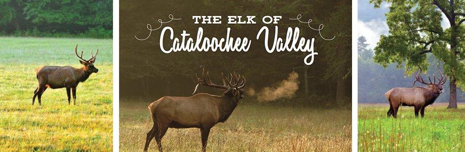 Elk-Banner.jpg