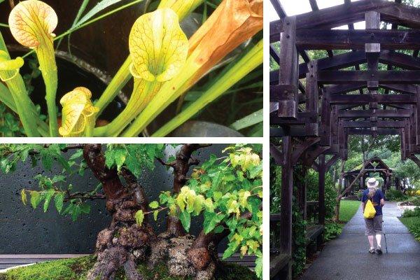 NC-Arboretum.jpg