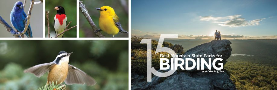 Birding-Banner.jpg