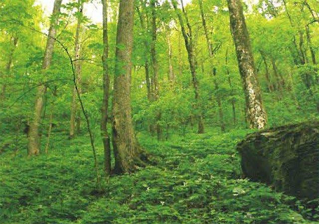 Forever-Forest.jpg