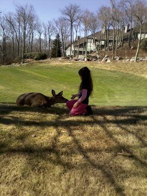 Mimi the Deer