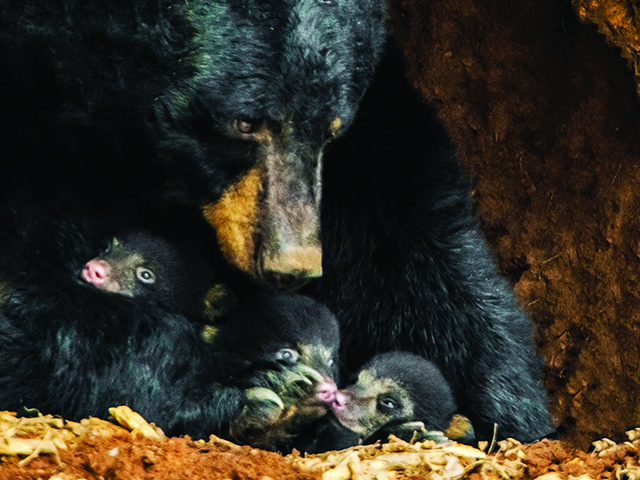 Mam and Cubs