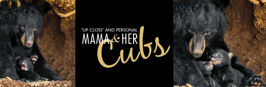 Mamm-and-cubs-banner2.jpg