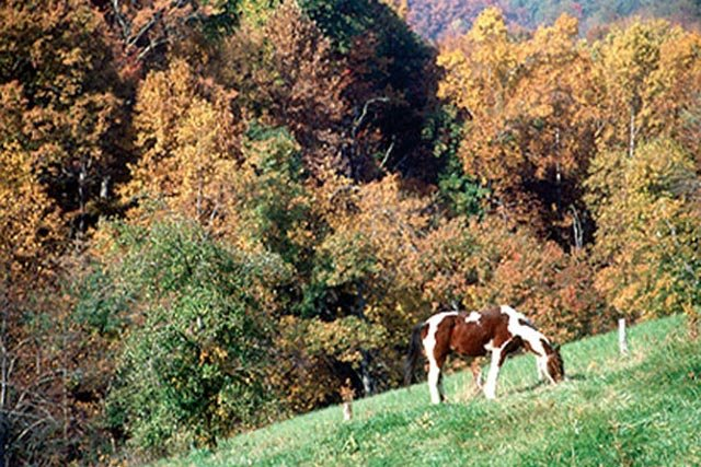 Exploring southwest virginia 39 s mile high blue ridge for Floyd county arts and crafts festival